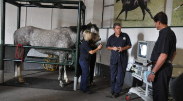 Pony in container hooked up to machine