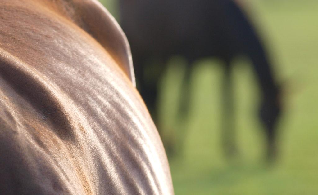 Horse curves