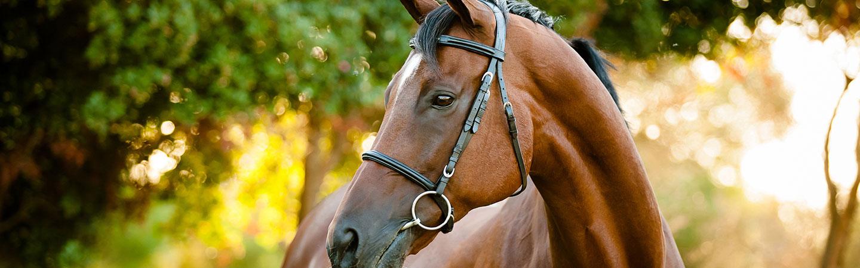 horse feeds header