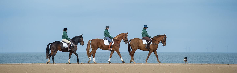 Dengie Balancers Header Horses on Beach