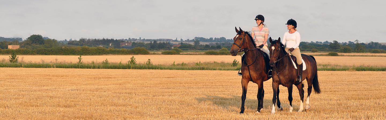 Hi-Fi Range Horses in Field