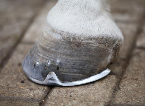 Healthy Hooves on Laminitis-Prone Horse