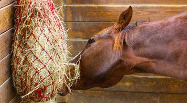 Horse Hay bag