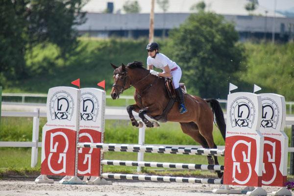 brown horse show jump