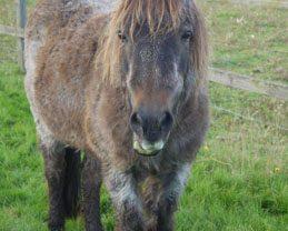 Cushings Pony - Jenny Swain