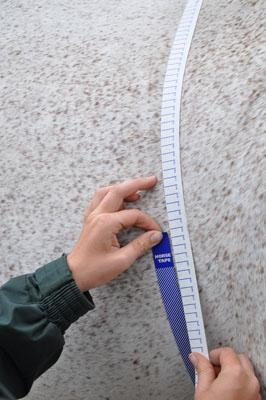 Horse Measuring Tape around Body