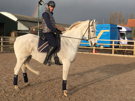 white dressage horse