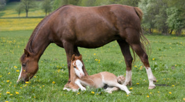 Brown Horse and Baby