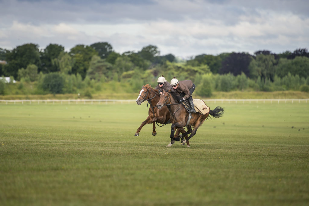 Horses with Jockeys in open field