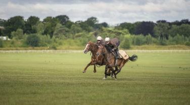 Horses being ridden in open field