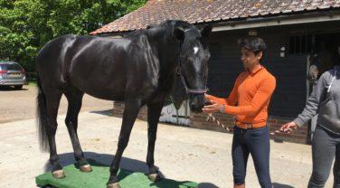 Dengie Nutritionists review dressage horses diets