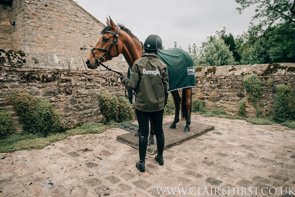 Horse in yard