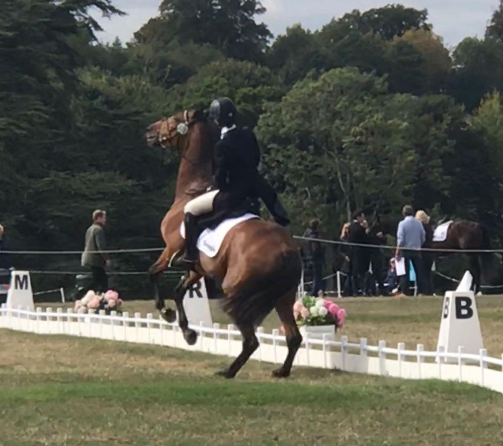 Horse Rearing at Show
