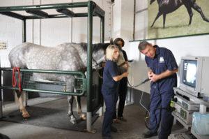 EGUS Horse Survey