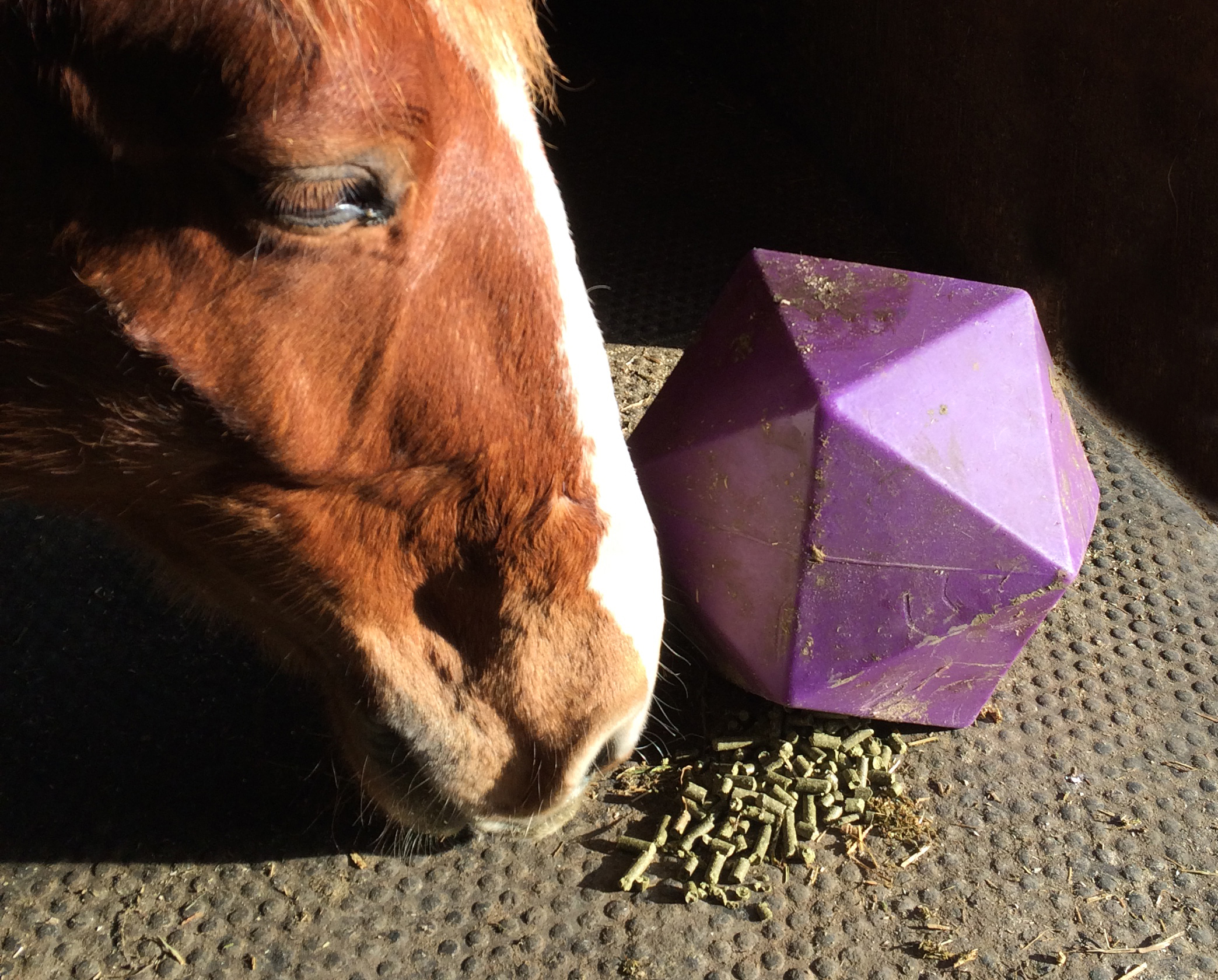 Horse eating Alfalfa Pellets from Toy