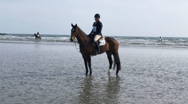 Googie on a beach in Ireland
