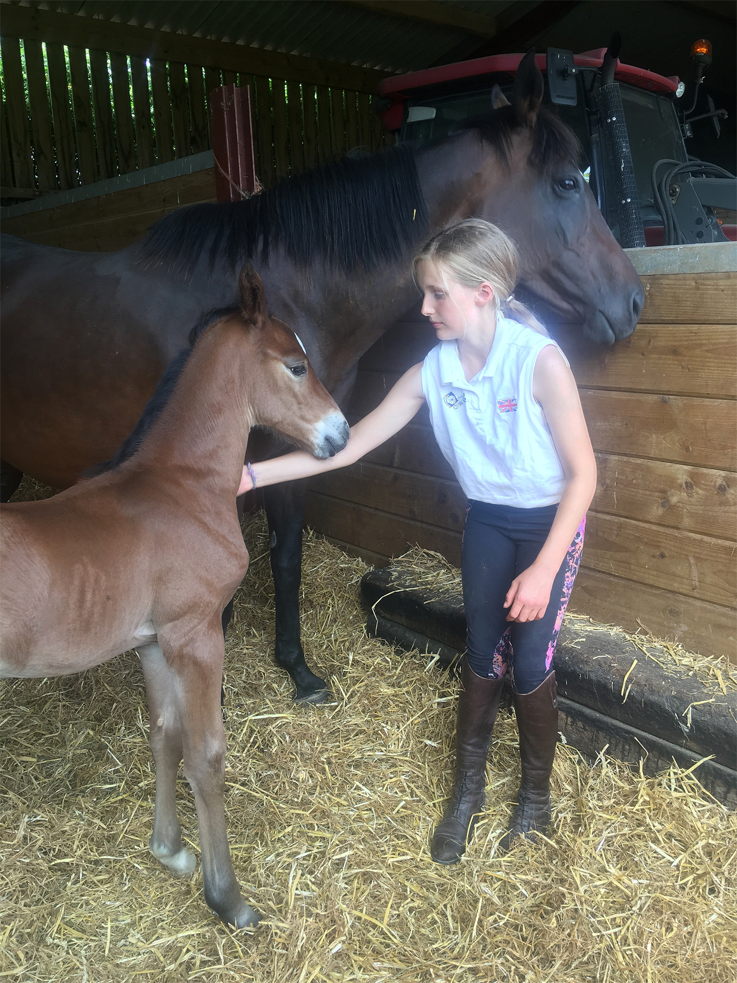 Maisie meets Nemo the foal