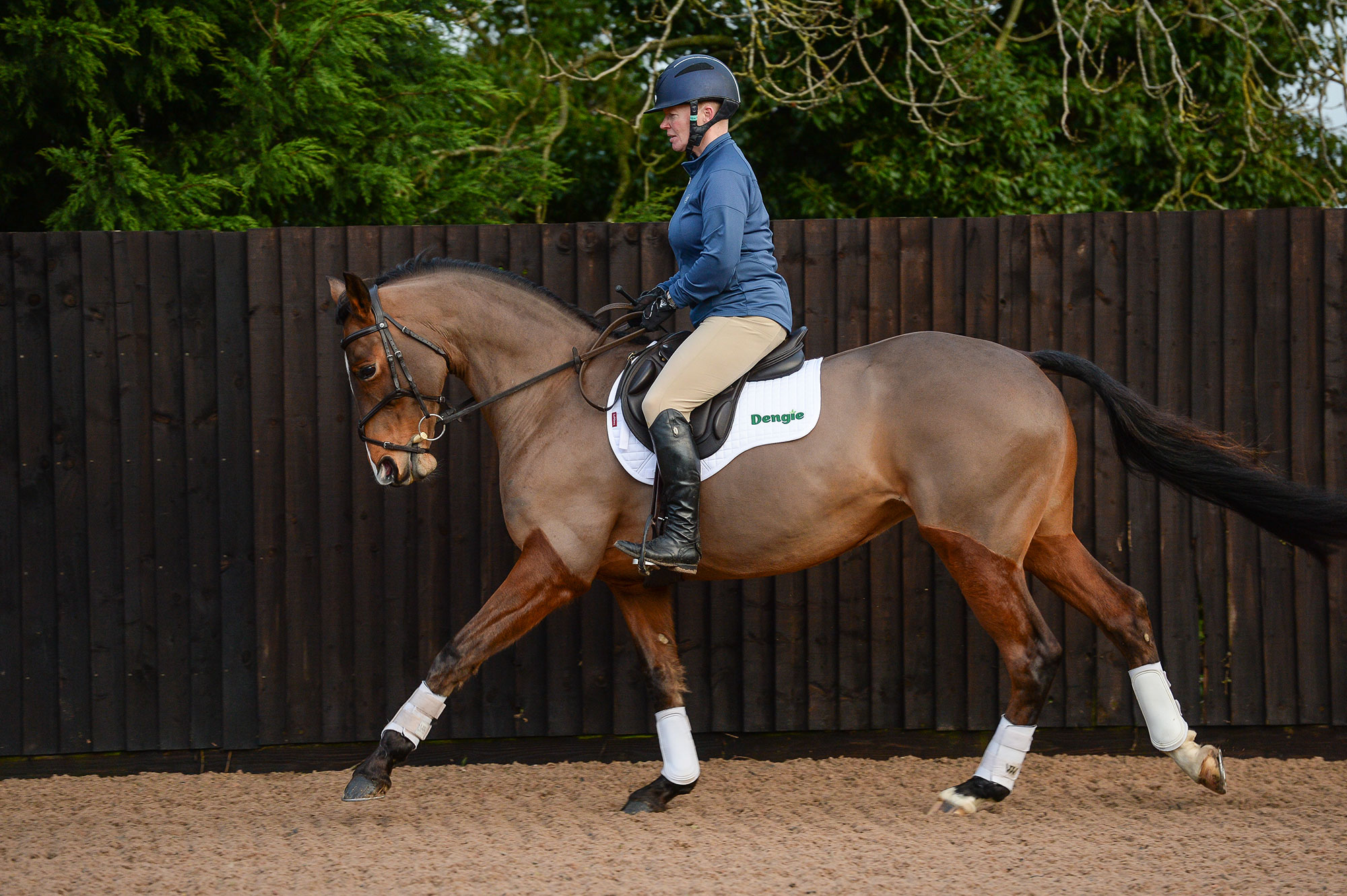 horse dressage training