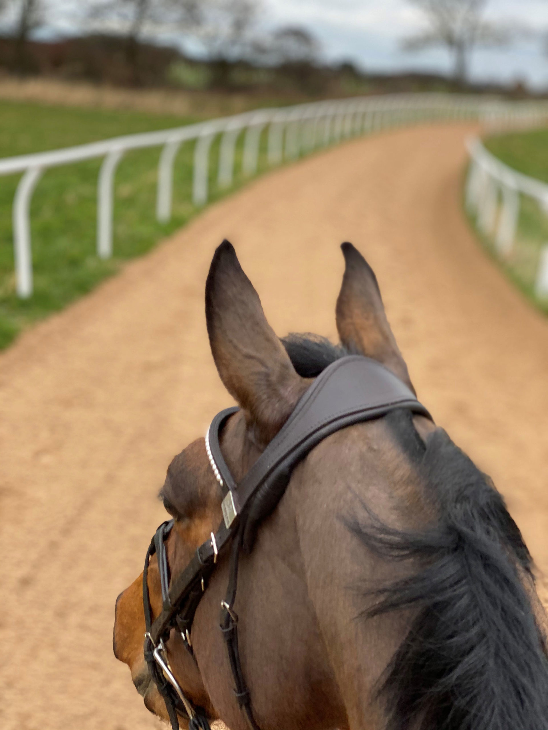 horse head gallops