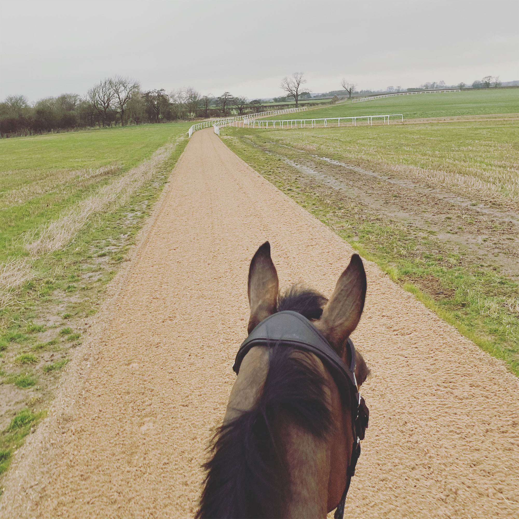 View of Gallops Through Horses Ears