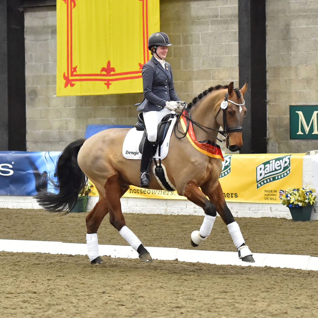 Horse and rider _ Dressage presentation