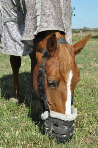 horse wearing grazing muzzle