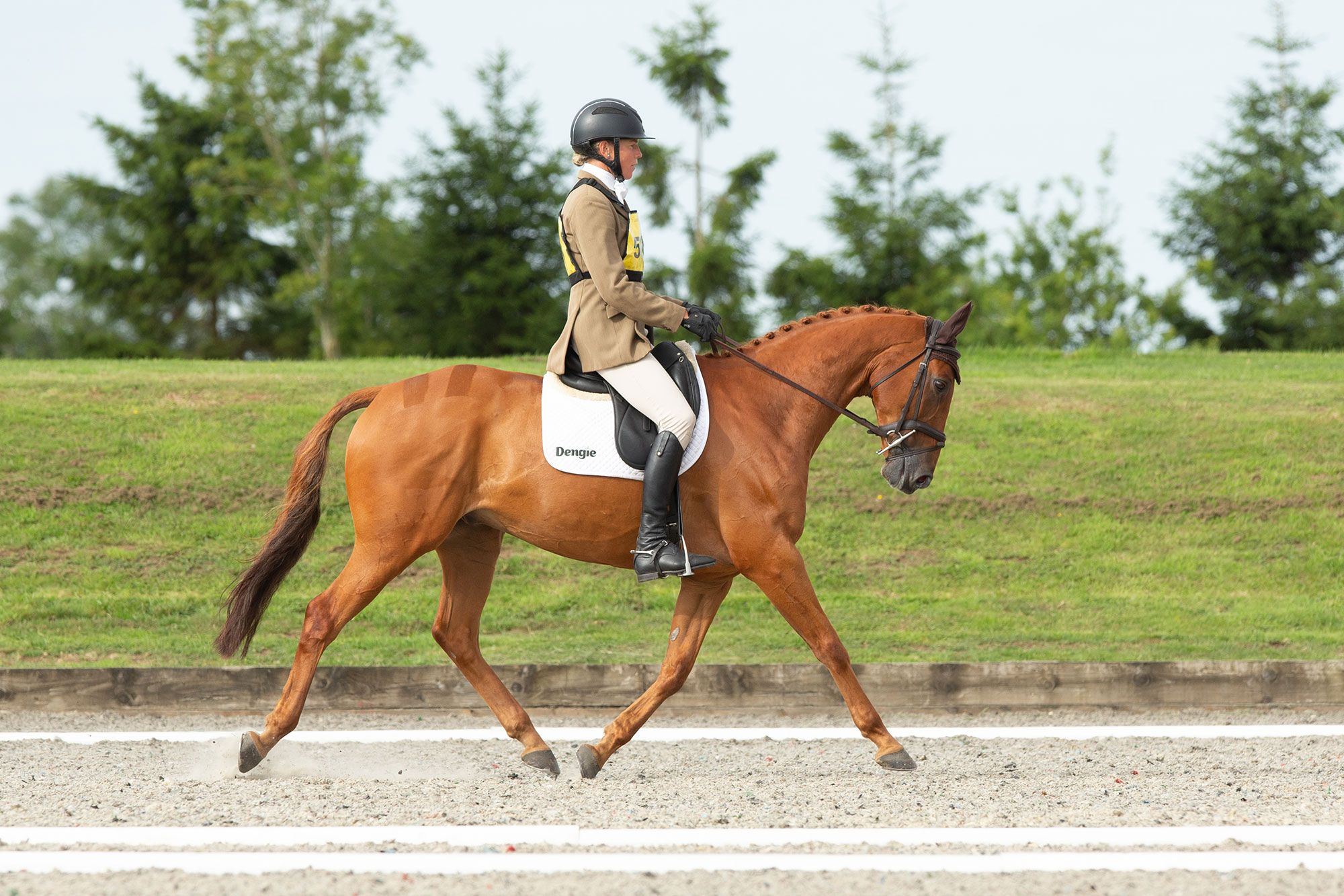 horse and rider in dressage arena