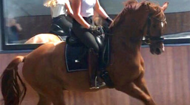horse and rider training indoors