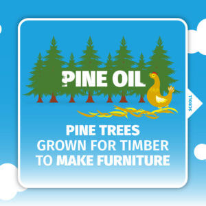 Dengie Fresh Beds Social Pine