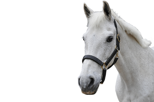 Horse transparent
