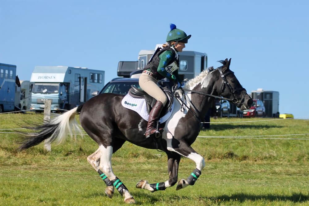 Horse running at show