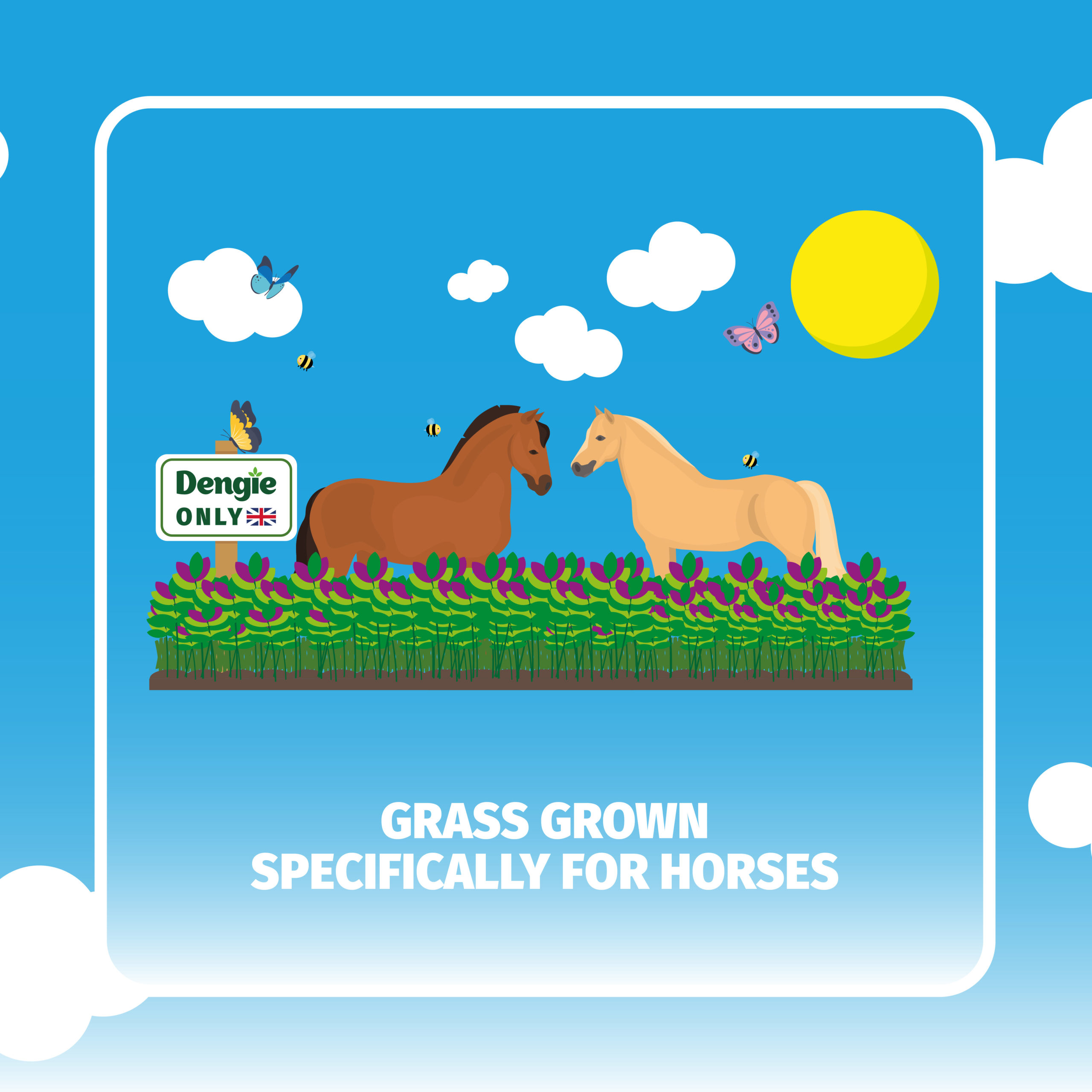 Dengie Meadow Grass