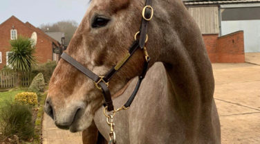 What to look for when buying a young horse to event