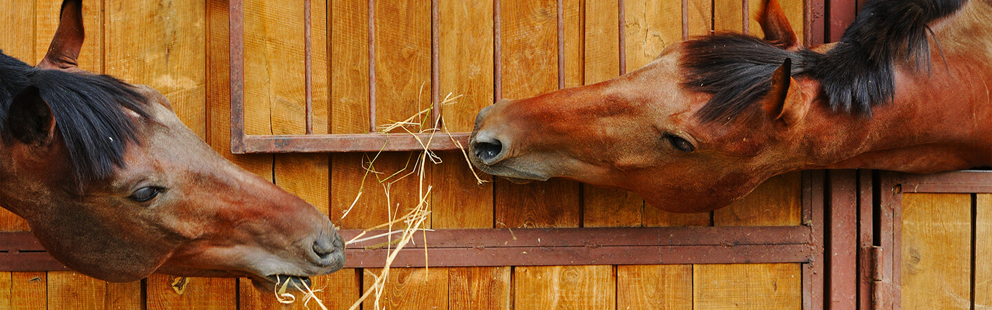Forage Replacers For Horses