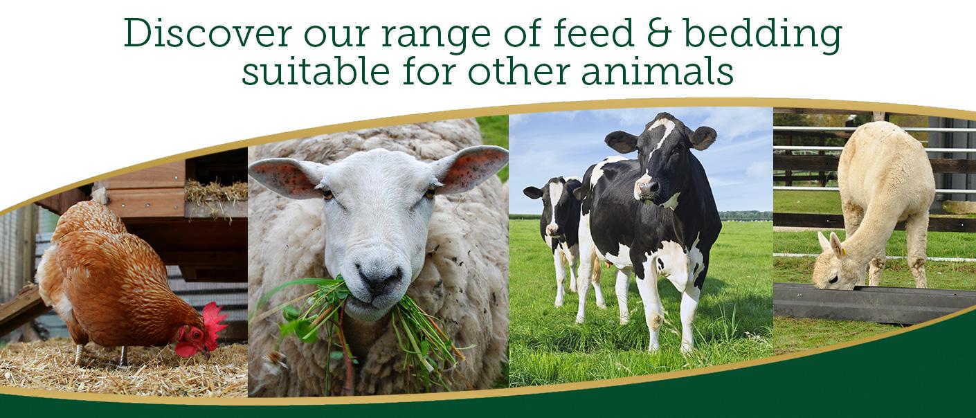 Other Animals Banner