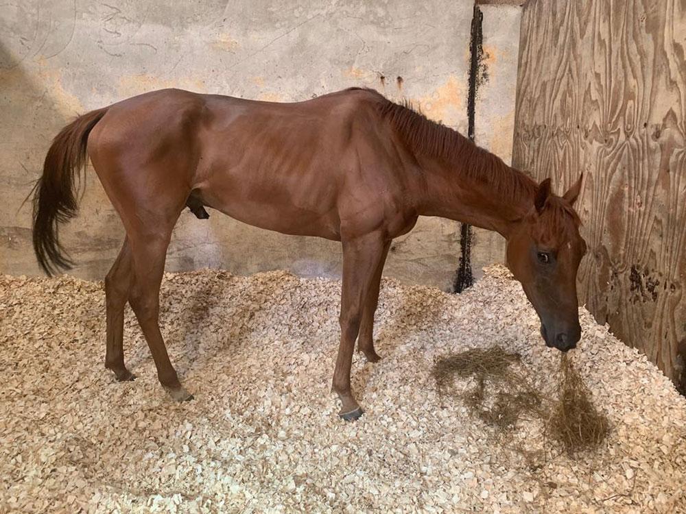 horse underweight
