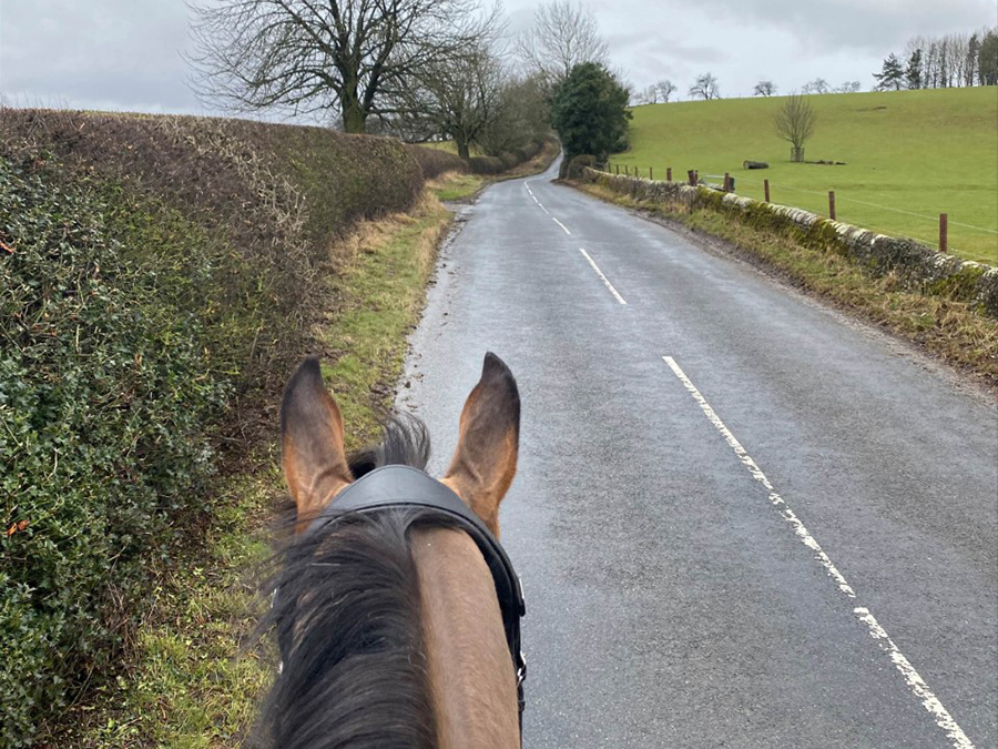 horse hacking along country road